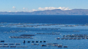 Fish Farms on Titicaca
