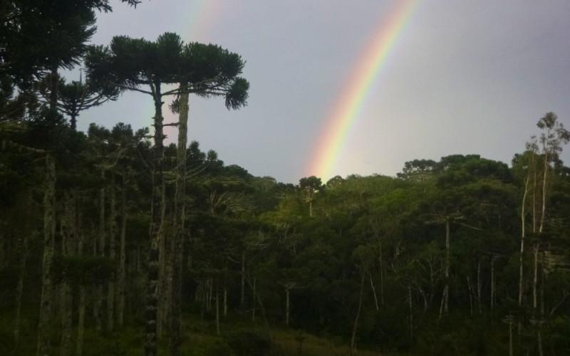Cambara Rainbow