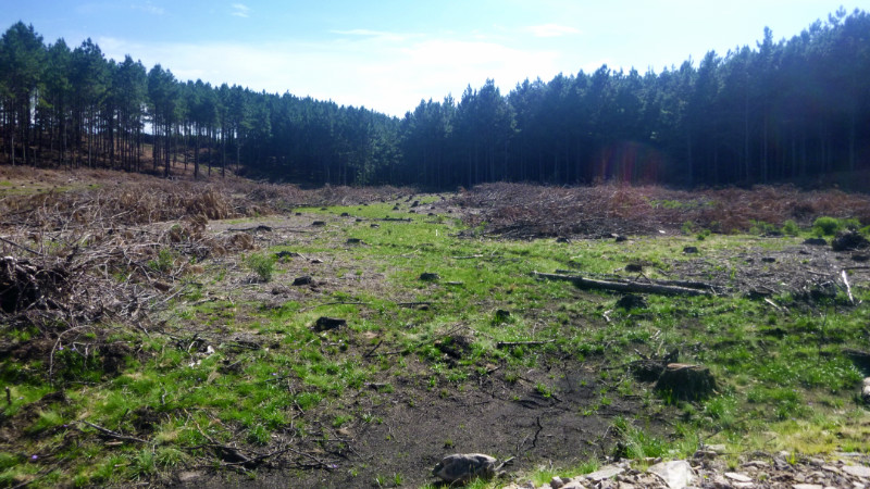 Deforested Camp