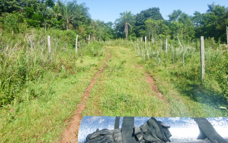 Grassy Lanes