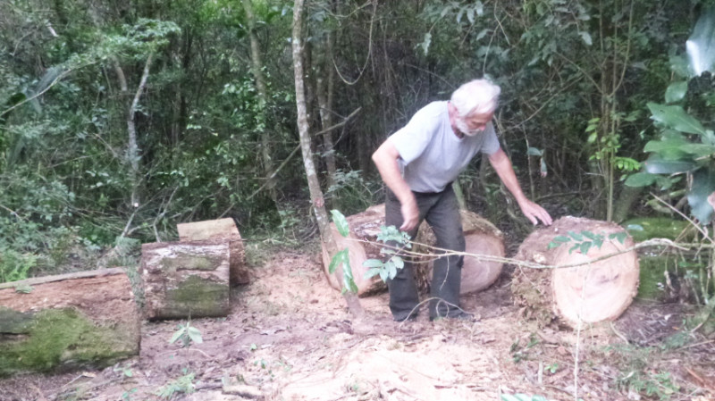 Wood Gathering